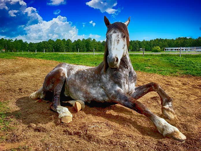Biotyna dla koni – kiedy jest potrzebna?
